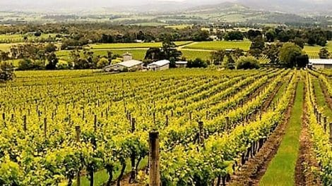 Warramate Wines