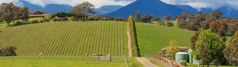 Yarra Valley Winery Accommodation