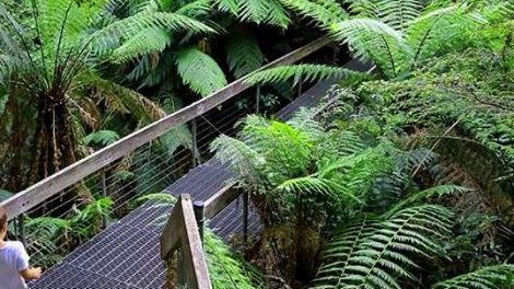 Warburton Rainforest Gallery