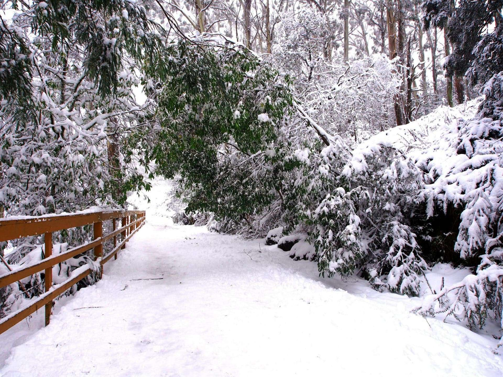 Mt Donna Buang in Winter