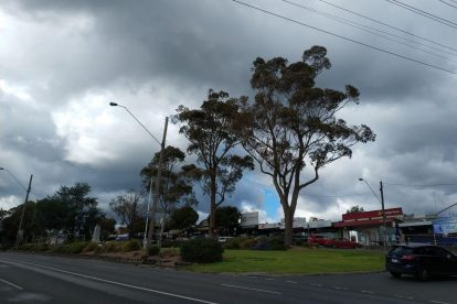 Lilydale 07