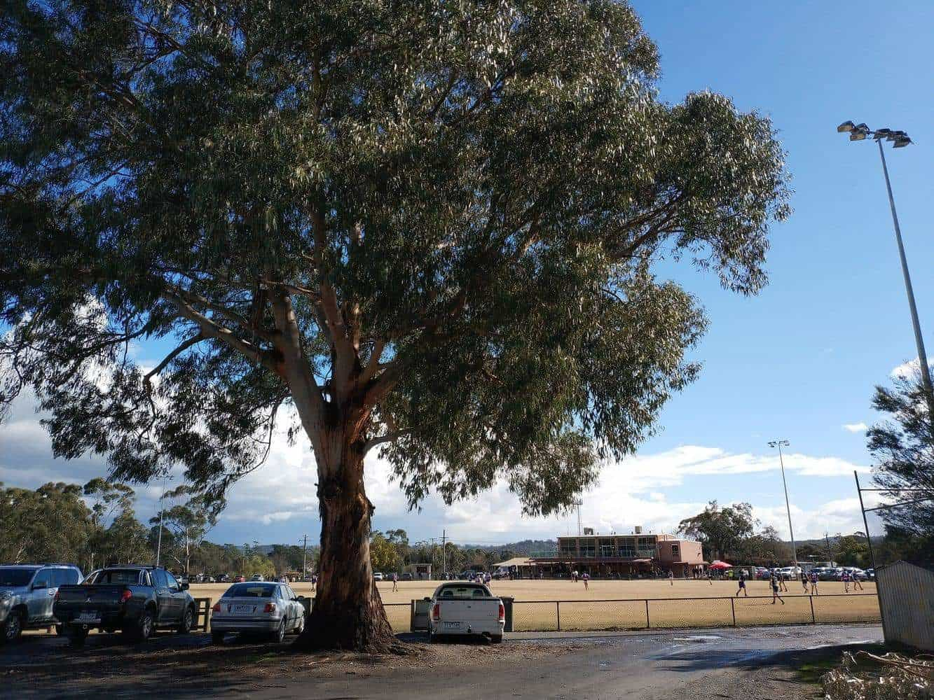 Woori Yallock Recreation Reserve 08
