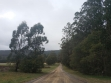 Toolangi State Forest 02
