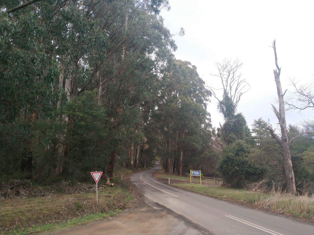 Toolangi State Forest 03