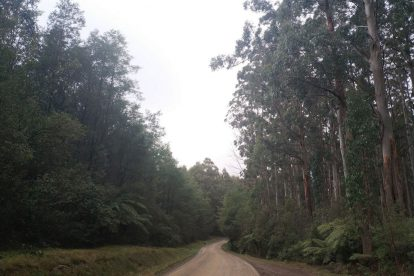 Toolangi State Forest 05