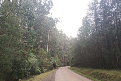 Toolangi State Forest 06