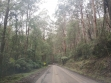 Toolangi State Forest 07