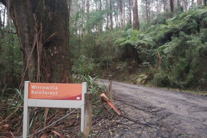Toolangi State Forest 08