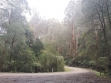 Toolangi State Forest 09