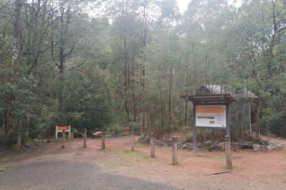 Toolangi State Forest 11