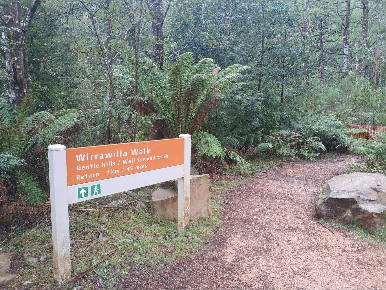 Toolangi State Forest 12