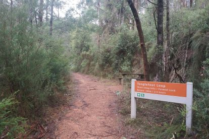 Toolangi State Forest 13