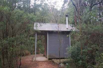 Toolangi State Forest 14