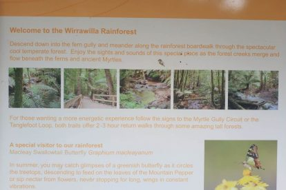 Toolangi State Forest 16
