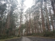 Toolangi State Forest 21