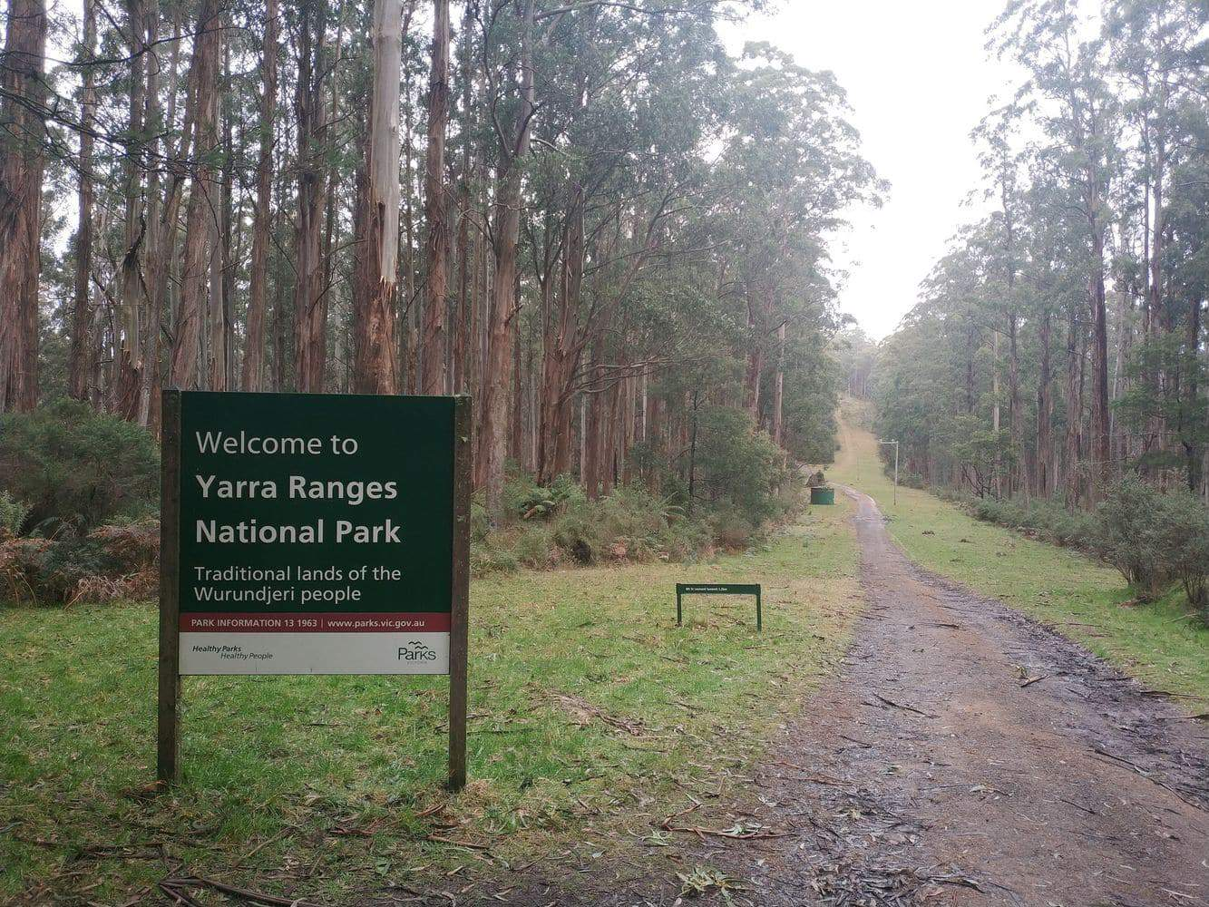 Toolangi State Forest 22