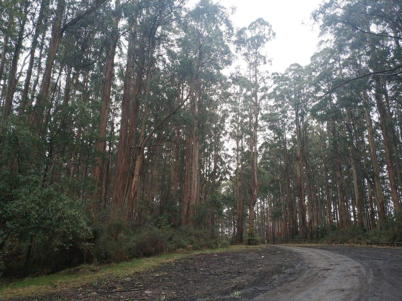 Toolangi State Forest 23