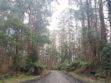 Toolangi State Forest 24