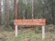 Toolangi State Forest 26