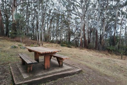 Mt Donna Buang 06