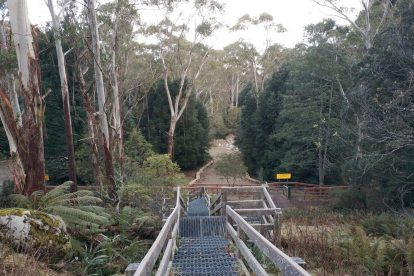 Mt Donna Buang 15