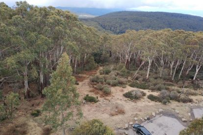 Mt Donna Buang 23